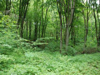 Wälder in Ermland-Masuren, Foto: (c) B.Jäger-Dabek