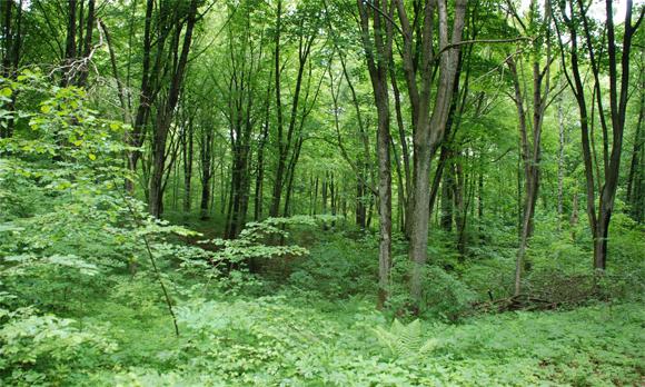 Urwaldähnliche Dylewska Gora, Foto: B. Jäger-Dabek