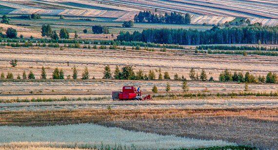 Von Bio bis industriell: Investitionsfeld Landwirtschaft in Ermland-Masuren, Foto: pixabay.com/CC0